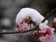 Vom Winter überrascht (c) Carola Peters