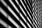 Am Fenster (c) Carola Peters