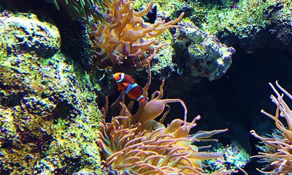 S.E.A.海洋館熱帶魚
