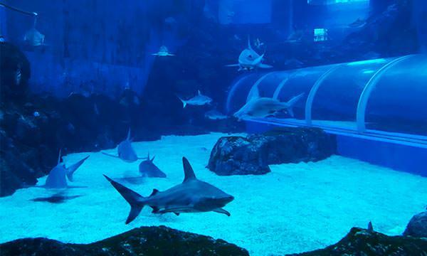 S.E.A.海洋館鯊魚區