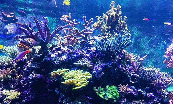 S.E.A.海洋館熱帶珊瑚礁
