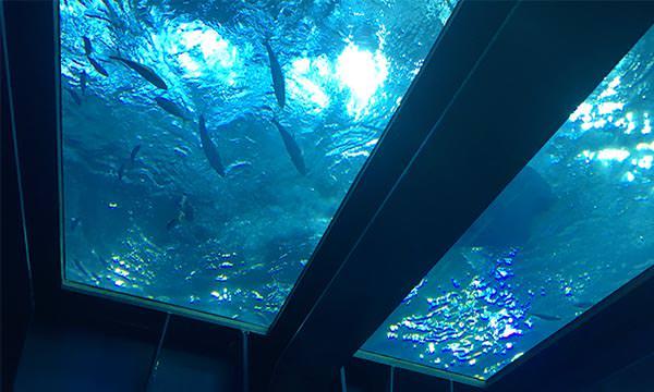 沖繩美麗海水族館一樓
