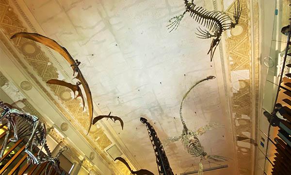土銀展示館 恐龍展