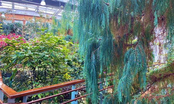 典藏植物園 溫帶植物區