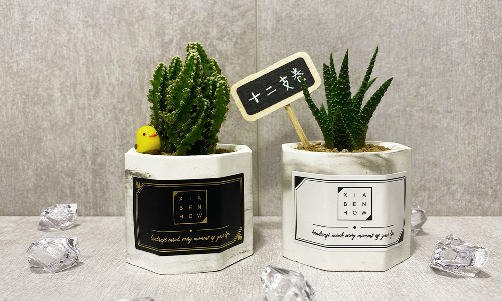 【下班隨手作】大理石紋雙八角多肉 DIY超療癒植物盆栽
