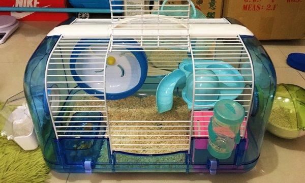 養倉鼠 必需品