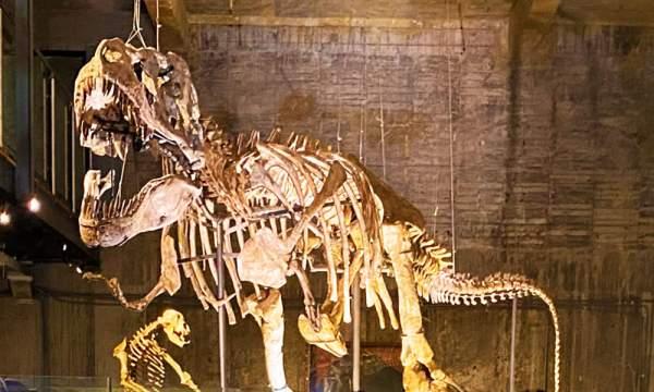 瘋狂夢想藝術園區 暴龍化石