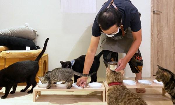 貓欸 放飯餵食時間