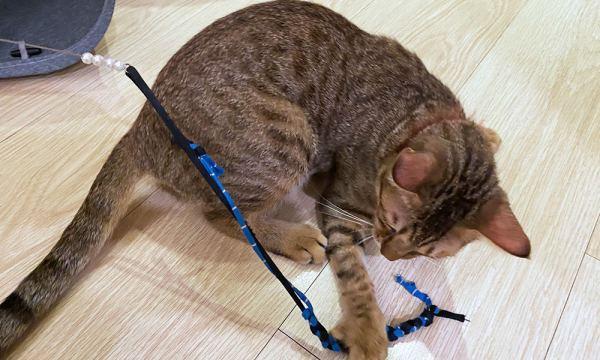 店員解釋都貓棒玩法