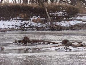 Wagon trash in river