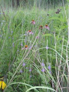 Subtle color in a mature prairie.
