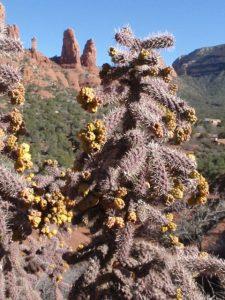 Cactus frame red rocks.