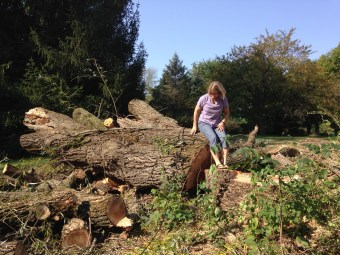 Willow tree - removal