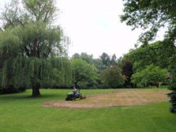 Willow tree - prairie planting