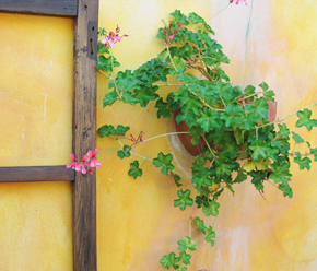 ivy in basket on wall