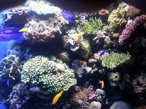 color fish plants