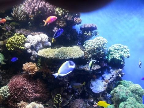 color fishs