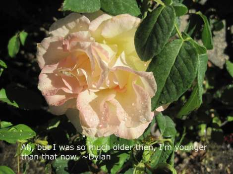 rose dew neighb dylan best