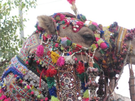camel adornd GREAT