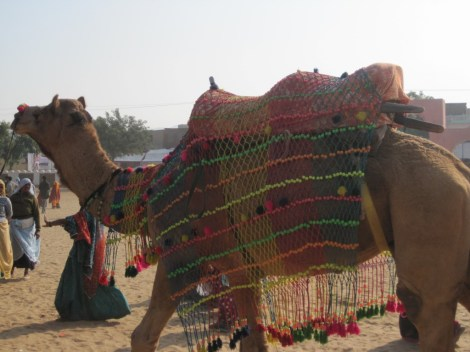 camel ok