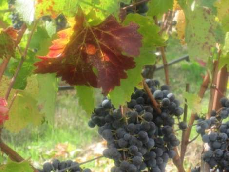 wine-country-in-fall