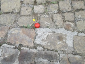 cobblestone tom flower gratteri