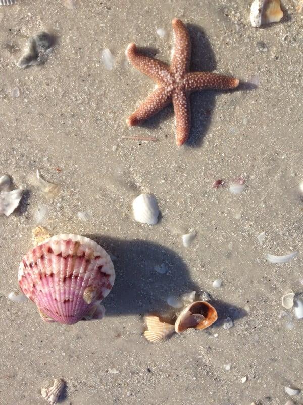 assorted shells best