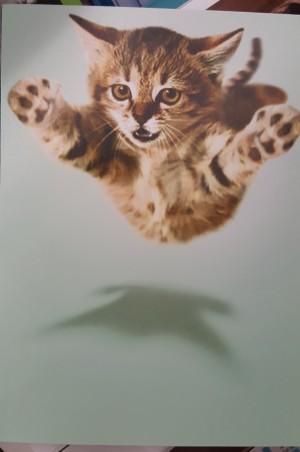 cat fly