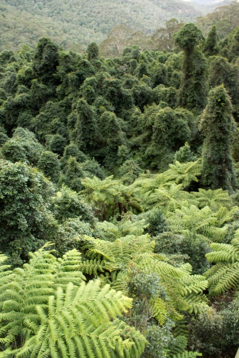 Lush vegetation down in the tropical walk.
