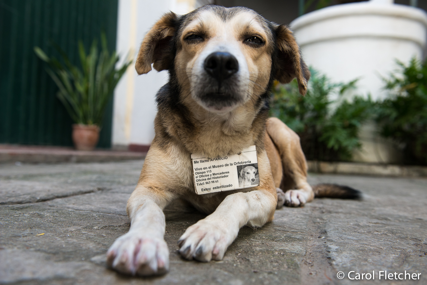 Rescue dogs from cuba