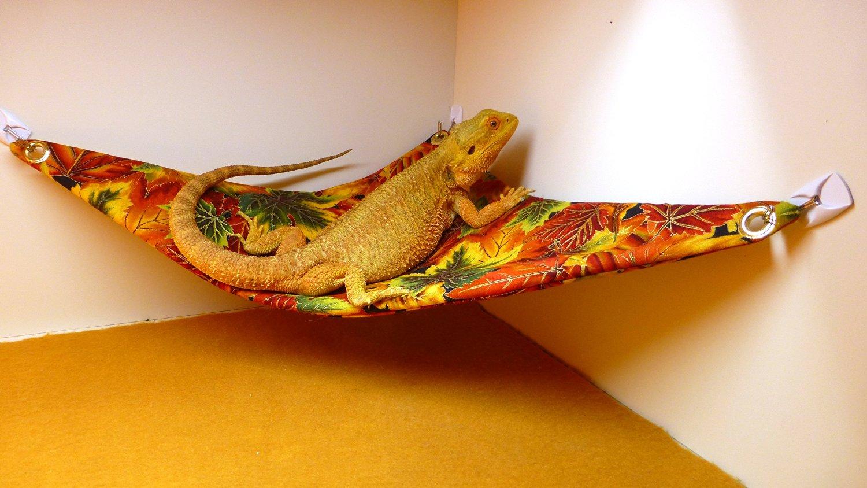 Lizard Hammock Carolina Designer Dragons Hammock For