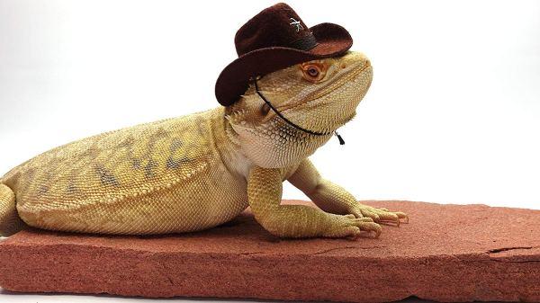cowboy hat # 56