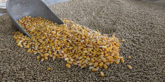 Grain Based Ethanol is often used as a solvent with Cannabis fiber