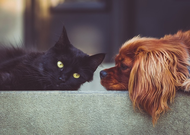 CBD is useful to help pets age comfortably