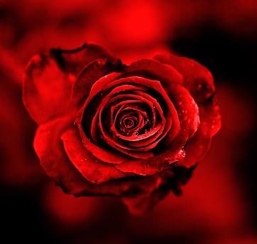 Rojo sobre rojo.