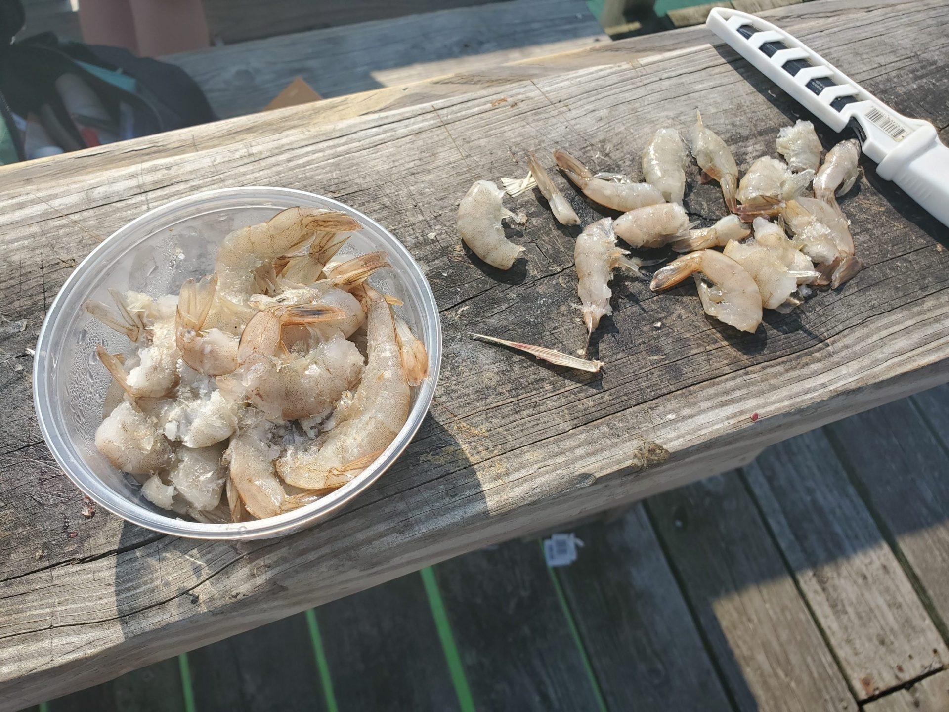 pier Atlantic Beach fish coastal environment habitat tourism economy hurricane risk