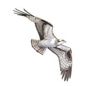 Osprey Flight 5k April 18 2015