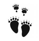 bear-foot-run