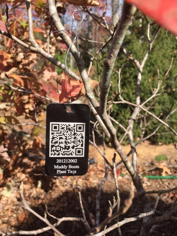 Fothergilla with Muddy Boots Plant Tag (scan it - it works!)