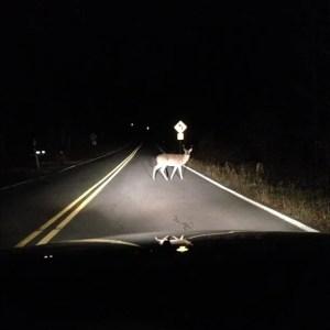 deer-headlights