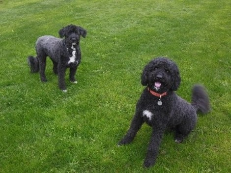 Bella, on the left, with her companion, Molly