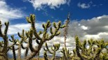 Cacti growing at the top of Moray