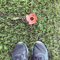 Early morning walk, cute flower.