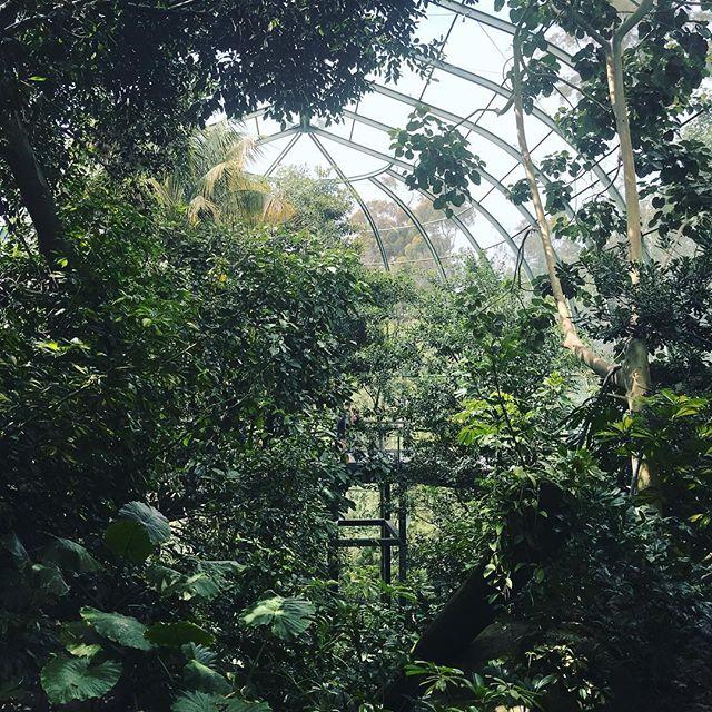 Owens Aviary