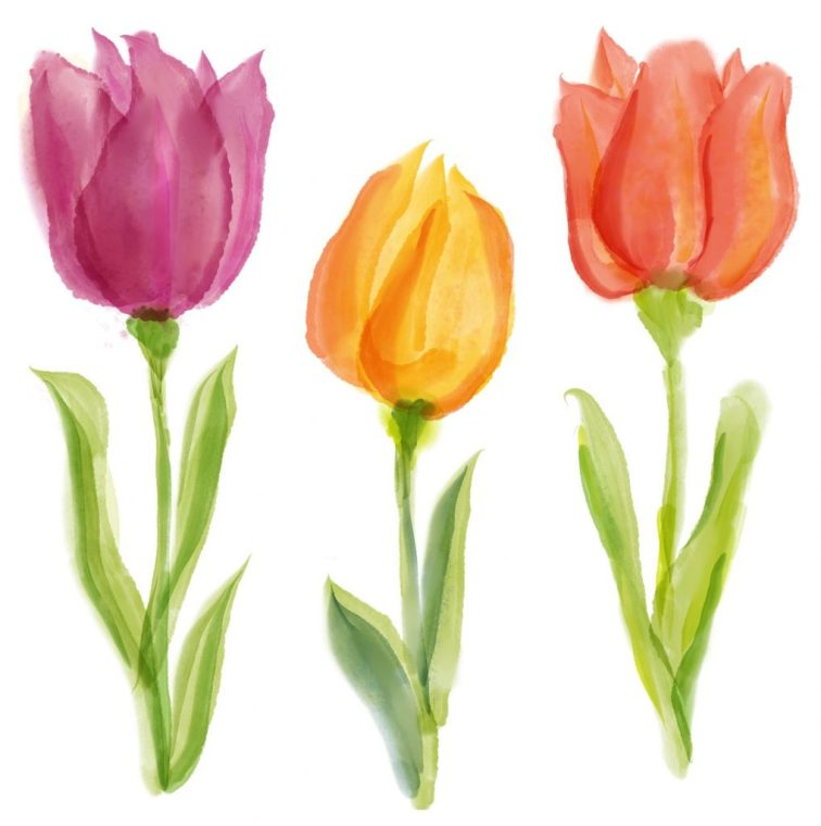 tulips digital watercolor