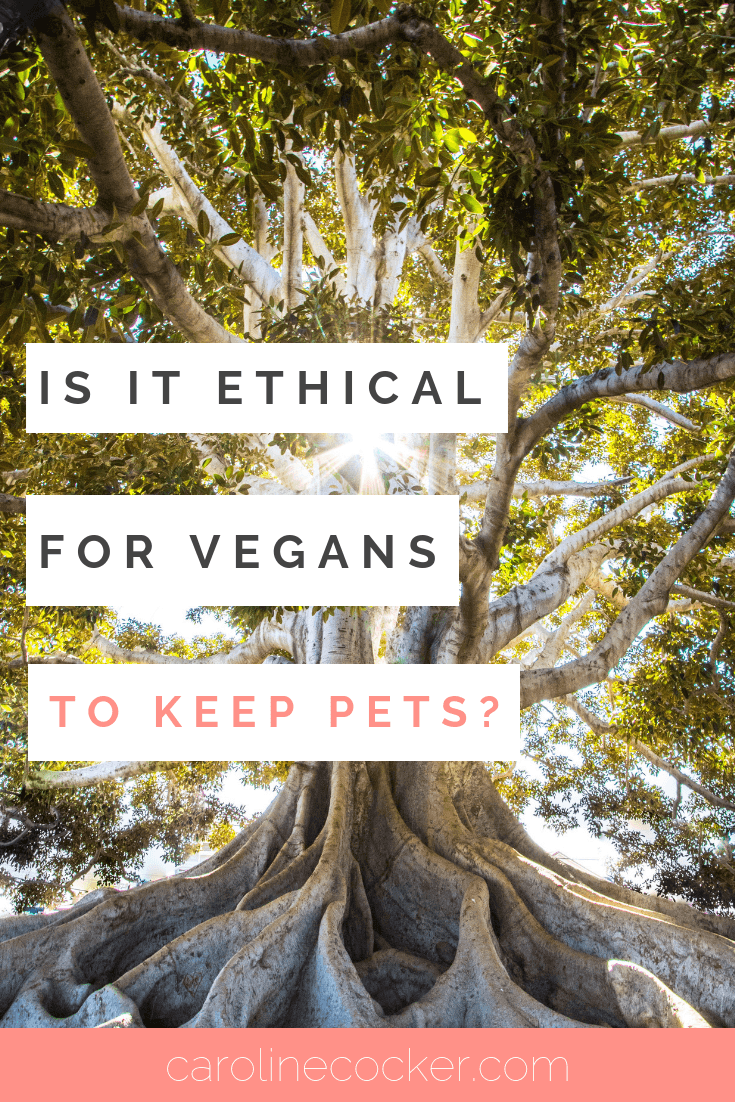 can vegans have pets?