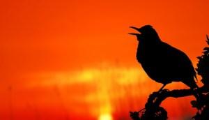 Morning lark