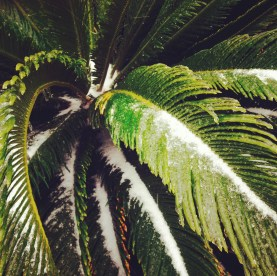 Ice on a frond