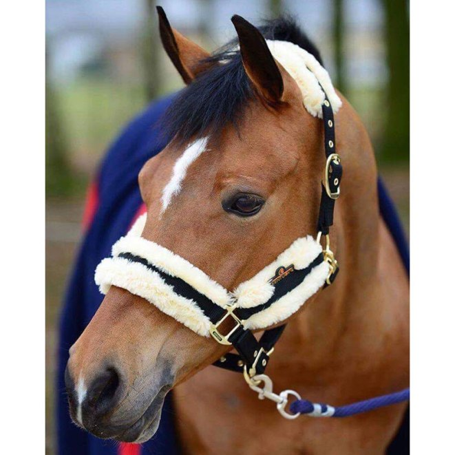 Kentucky-Horsewear-Nylon-Sheepskin-Headcollar