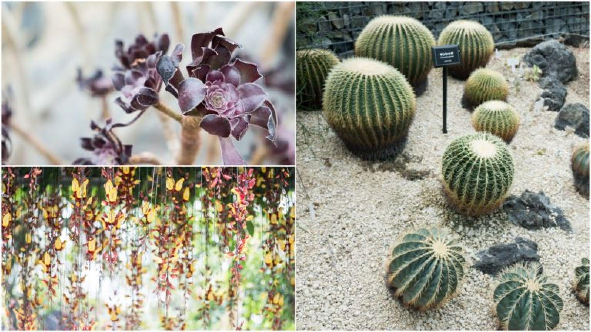 Plants in the Shinjuku greenhouse in Tokyo